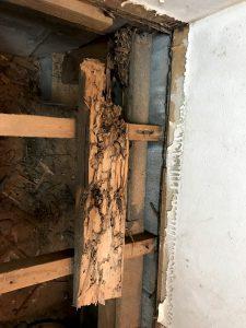 腐った木材